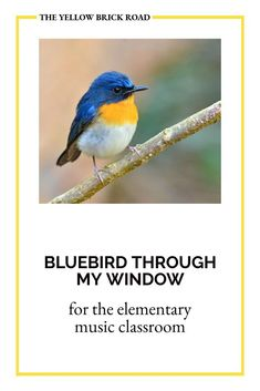 A fun circle game for lower elementary music students using the song Bluebird Through My Window. Music Education Games, Music Games, Music Mix, Elementary Music Lessons, Middle School Music, Circle Game, Purple Bird, Yellow Brick Road, Music Classroom