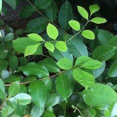 Beautiful Bright Green Leaves