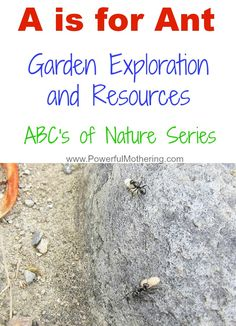 A is for Ant Garden Exploration and Resources
