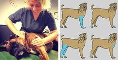 Pour le garder en bonne santé, 8 zones où masser votre chien que vous devez connaître