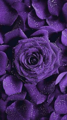 Love Pink Wallpaper, Iphone Wallpaper Photos, Purple Flowers Wallpaper, Beautiful Flowers Wallpapers, Flower Phone Wallpaper, Rose Wallpaper, Beautiful Roses, Lavender Aesthetic, Purple Aesthetic