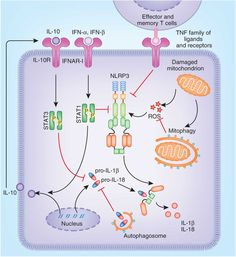 The NEK7 enzyme has been completely characterized for its role in innate immunity, however until this discovery was made and the study published, scientist