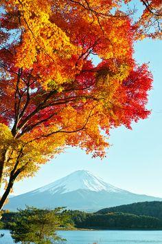 Chi dice che l'autunno non è colorato ed emozionante? Andate in #Giappone per ricredervi... (sullo sfondo il Mt. Fuji)