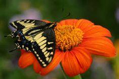 pollination .