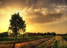 Wieś, Droga, Drzewo, Zachód