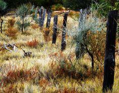 Alice Springs, Australia 2011 by Ashley J. Palmer, via Flickr Alice Springs, Australia, Plants, Painting, Art, Art Background, Painting Art, Kunst, Paintings
