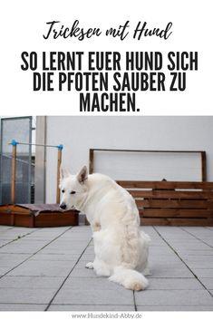 #Hund #Hundeblogger #Hundeliebe #Wissen #Tricks Hunde || Erziehung || DIY || Wissen || Gesundheit