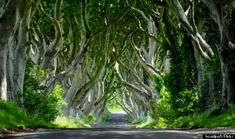 """*MUST SEE* 'Ireland's Dark Hedges Is The Most Mystyfying Road Ever' Neat HuffPo road trip gallery/report: """"in Northern Ireland (near the village of Armoy) along Bregagh Road lies a stunning site: A row of Beech trees that curve in crazy cool ways... To get here, drive northwest about 50 miles from Belfast off Antrim Coastal Road."""""""
