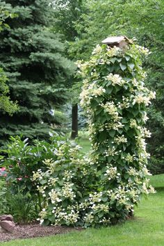idea for climbing hydrangea