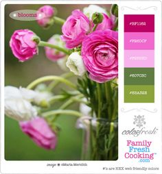 ColorFresh Color Palette #5 { Blooms } on FamilyFreshCooking.com © MarlaMeridith.com #design #crafts #DIY #graphics #photography #flowers #pink