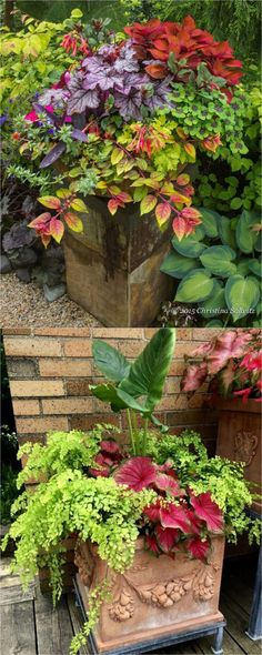 How to create beautiful shade garden pots using easy to grow plants with showy foliage and flowers. And plant lists for all 16 container planting designs! #containergardeningideasforsun