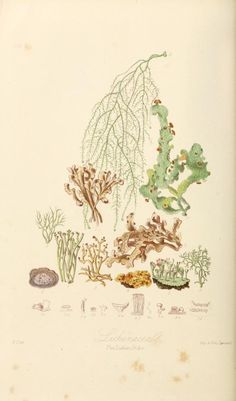 Illustrations of the natural orders of plants by Elizabeth Twinning, 1868