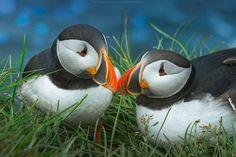 Sweet couple   Flickr - Photo Sharing!