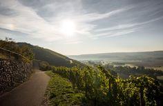 Frühlingsplätzchen: Weinberg vom Wein- und Sektgut Bamberger an der Nahe #Nahe #Nahewein #Riesling #Sekt #Bamberger #Meddersheim #Wein #Winzer #Weingut