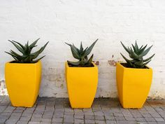 Vamp is open today, Heritage day, Thursday 24 September from 9 30 am until 2 30 pm. Find us at Albert Road, Woodstock, Cape Town. I Love House, 24 September, Woodstock, Cape Town, South Africa, Planter Pots, Sweet Home, Shots, Houses