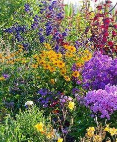 Perennial border in a country garden with Hemerocallis 'Corky', Aconitum 'Franz Marc', Atriplex hortensis, Heliopsis, Phlox amplifolia 'Minnehaha', Phlox paniculata 'Werner Dittrich'