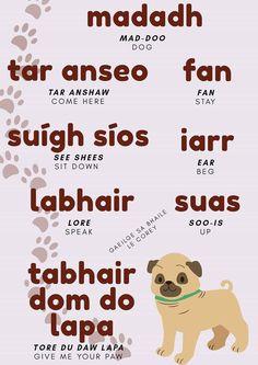 Irish Language, Languages, Celtic, Ireland, Give It To Me, Anna, Study, Teaching, Random