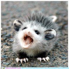 Baby possum...of the grotto?