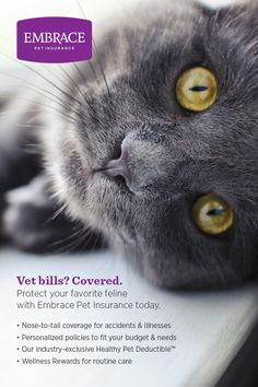 Never let expensive vet bills come between you and the best care for your favorite feline. Get a free quote & personalize the perfect policy for your pet today. get some yourself some pawtastic adorable cat apparel! Embrace Pet Insurance, Cat Insurance, I Love Cats, Cute Cats, Animals And Pets, Cute Animals, Dog Anxiety, Healthy Pets, Cat Facts