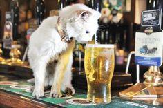 pub-cat.jpg 478×318 pixels