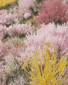 SS17 palette - wild flowers.