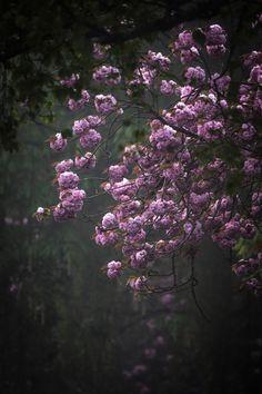 Pink Spring - Pink Spring