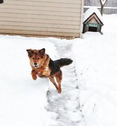 This fan's pup is nearly as excited as a student on a Snow Day! #ItsAmazingOutThere #Pets