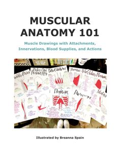 Anatomy Resource: A Full Set of Drawn Muscles with Attachments, Innervations, Blood Supplies, and Actions! Physical Therapy Student, Forearm Muscles, Organizing Hacks, Medical Anatomy, Human Anatomy And Physiology, Muscle Anatomy, Major Muscles, Anatomy Study, Muscle Body