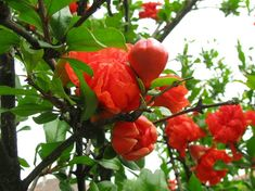Virágzik Vegetables, Gardening, Lawn And Garden, Vegetable Recipes, Veggies, Horticulture