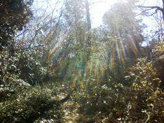 New Park Birchwood