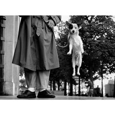 Love Photography, Children Photography, Street Photography, Famous Street Photographers, Schnauzer, Elliott Erwitt Photography, Robert Doisneau, Magnum Photos, Mans Best Friend