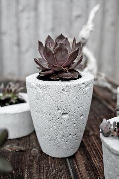 concrete planter:: concreto ::