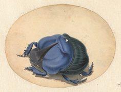 Dung beetle. Rijksmuseum, Public Domain