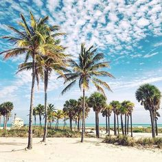 Paradise is waiting for you! @360val #TravelTuesday #miami
