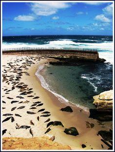 Seal Cove, La Jolla Shores, San Diego, California by moonjazz, via Flickr
