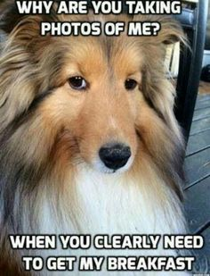 Hahaha this is like my dog :)