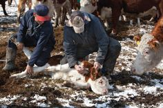 For Antibiotics Awareness Week, Misuse in Farm Animals Cannot be Overlooked