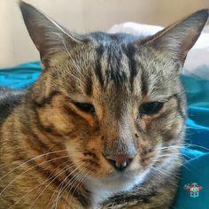 #furryfriend  #WPH_86 #WPH_86_dapperdavid1971 #weeklyphotohunters #photohunt #catsofinstagram #cats_of_instagram Photos from my travels