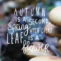 ✿ ✿  Autumn is a second spring when every leaf is a flower   ✿ ✿.