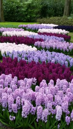 A vertical garden is a garden that grows upward (vertically) using a trellis or other support system, rather than on the ground (horizontally) Beautiful Flowers Garden, Flowers Nature, Amazing Flowers, Pretty Flowers, Purple Garden, Colorful Garden, Amazing Gardens, Beautiful Gardens, Formal Garden Design