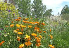 Plantas medicinales y aromáticas. #naturaleza #extremadura #flores
