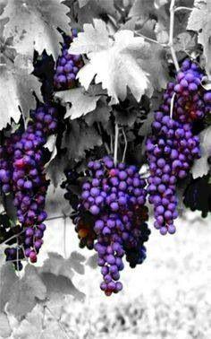 •♥•✿ڿڰۣ(̆̃̃•Aussiegirl #Purple #Passion