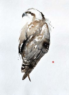 """Osprey"" by Karl Martens.  Has he EVER published anything that is not perfect?"
