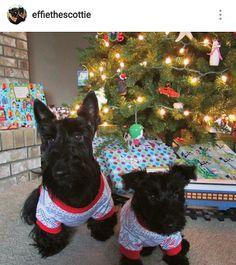 Scottie Mom: Scottish Terriers of Instagram