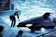 SeaWorld Gives Up Fight to Keep Trainers in the Water With Killer Whales
