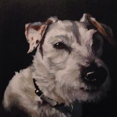 "white dog  24"" x 24  oil commission  #dogpainting #dogart #dogportrait #petportrait #seattleartist #oilpainting"