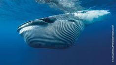 De Walvisweken