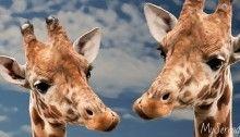 Mamma & figlia: quando l'Amore è anche dialogo