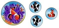 Lernmagnet: Clownfisch in Anemone
