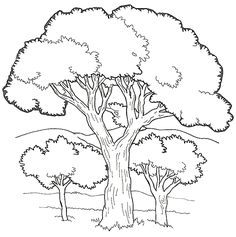 http://freecoloringpagesite.com/coloring-pics/trees-coloring-5.gif